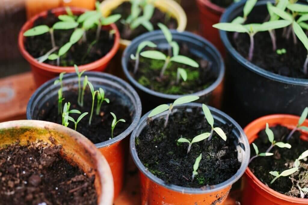 Pflanzen für das Frühbeet